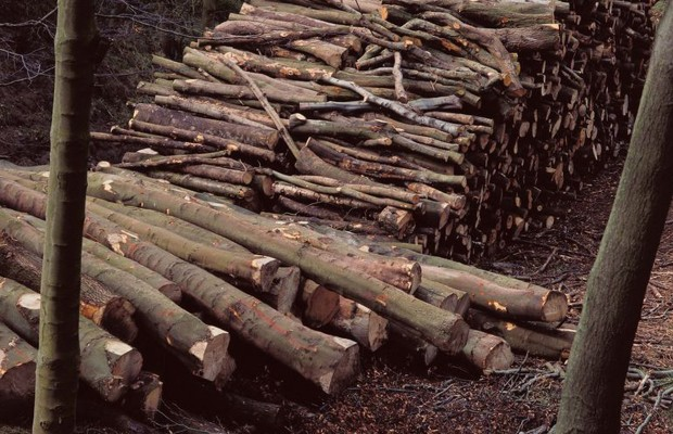 Buy Wood that Helps Maine's Forest