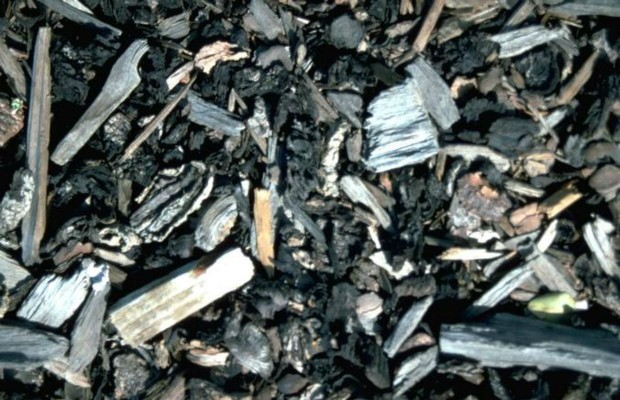 Save Your Wood Ash