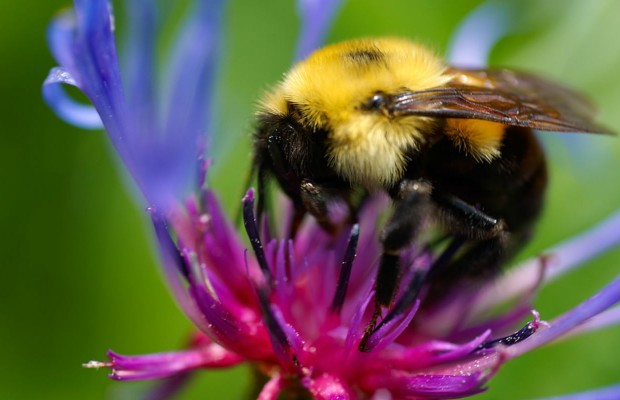Helping out Bees